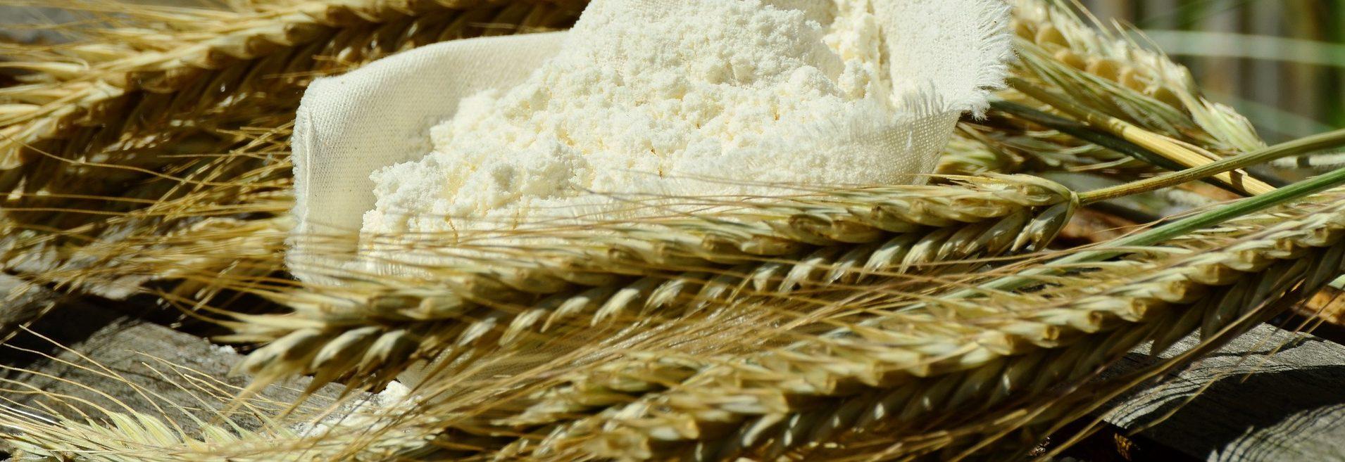 Mühle-Exkursion: Vom Korn zum Brot