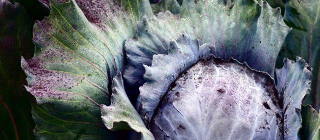 Interkulturelle Winterküche – Kochkurs am 28. Februar